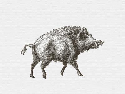 Wild Hog ... vector graphic illustration wild hog boar