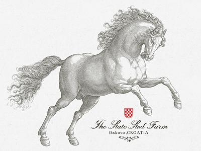 Croatian Stud Farm ... typography typo type lettering vector graphic horse croatia illustration