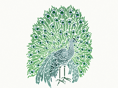 Peacock ... peacock illustration vector graphic
