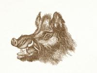 Wild Boar ...