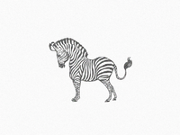 Little Zebra ...