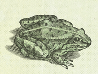 Frog II ...