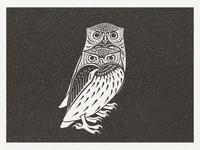 Owls ..