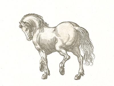 Stallion ... illustration stallion horse line art vector graphic
