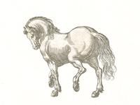 Stallion ...