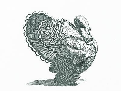 Turkey III .. turkey vector vector graphic