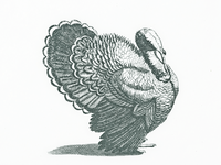 Turkey III ..
