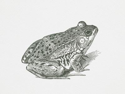 Frog III