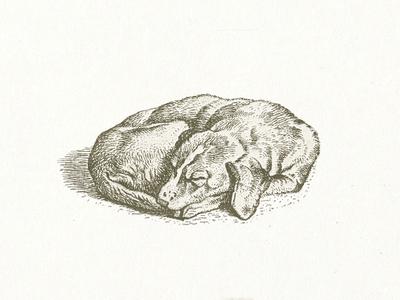 Pet Dog illustration dog vector graphic vector illustration vectorart