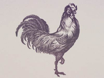 Rooster IV ... illustraion line art vector graphic cockerel rooster vector illustration