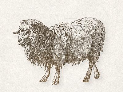 The Ram ... ram illustraion vectorart vector illustration