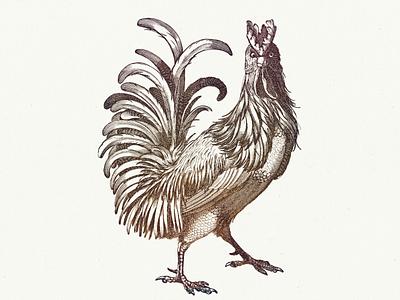 ROOSTER VI .... vintage cockerel rooster vectorart vector illustration