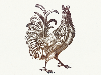 ROOSTER VI ....