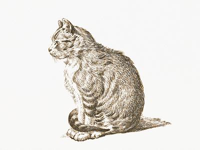 Cat ... cat illustration vector graphic vectorart vector illustration