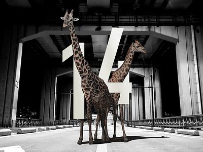 14 fourteen countdown road giraffa design