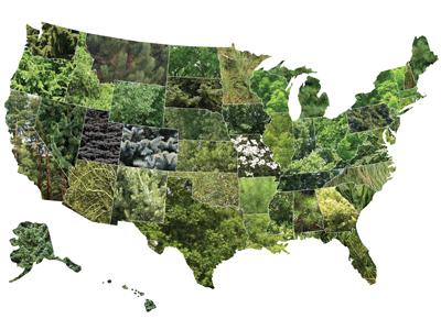 Usa State Tree Map
