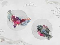Cute watercolor birds
