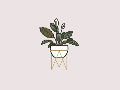 Peace Lily line art illustration leaves peace lily plant