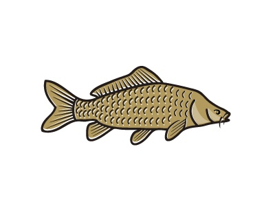 Carp carp fish fishing carping pond river fishery