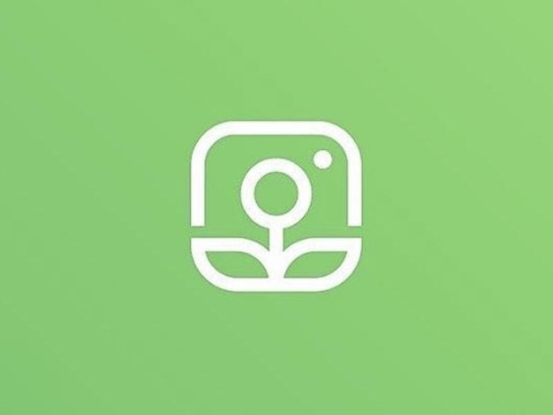 Organic Instagram Growth plant icon rebrand logo flower growth organic instagram