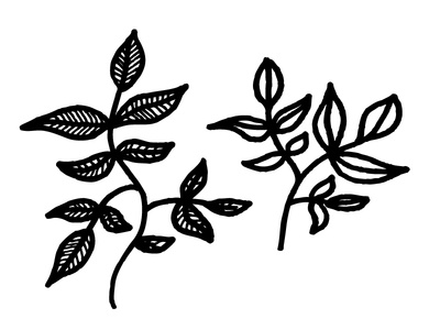 Branches leaves draw hand drawn handdrawn lines black and white nature simple illustration pen ink