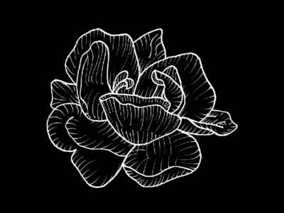 Rose Bloom rose floral flowers lines flower ink illustration hand drawn handdrawn draw black and white