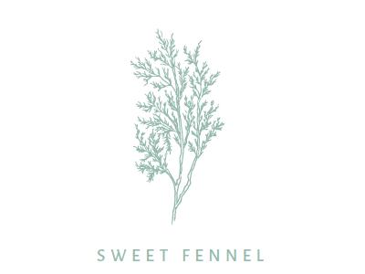 Fennel Illustration