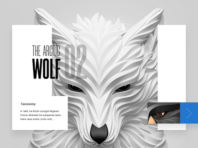Animal's Card Motion Design animal flat design flat ux tv gif ui video card color clean motion