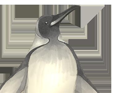 Penguin photoshop pencil drawing illustration copic