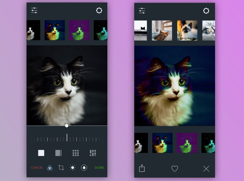 Tuxedo Cat Photo Settings mobile design mobile ui dark mode settings photography cats daily ui challenge design daily ui dailyui visual design ui design
