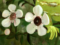 Jewelled Gecko & Manuka Flowers wacom intuos digital illustration digital art digitalart design illustration