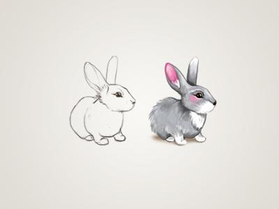 Rabbit dr