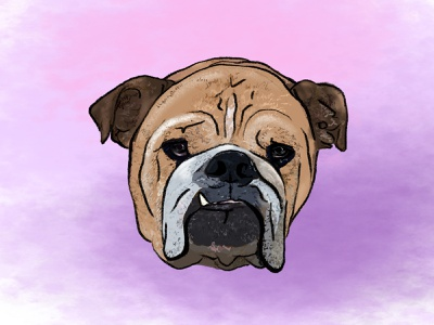 Bailey the bulldog dog 100 day ui design challenge procreate illustration bulldog 100 days the100dayproject