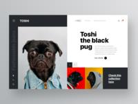 Toshi , the black pug