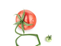 Tomato fullsize