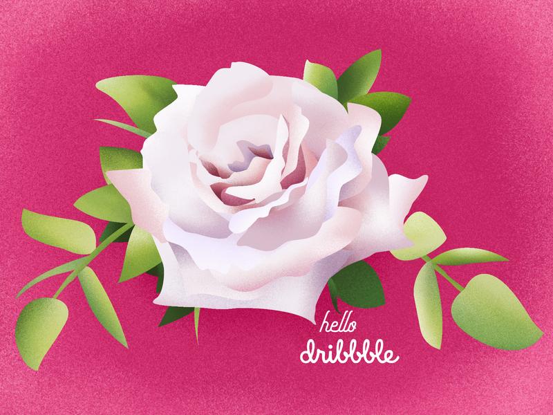 hellodribbble rose rosa flowers floral affinity designer illustration hello world hellodribbble