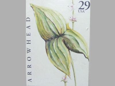 Arrowhead Flower Stamp postage stamp arrowhead flower stamp illustration