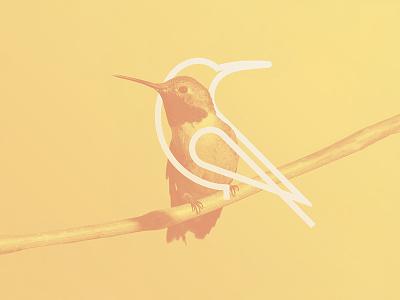 KOA Tours pictorial logomark minimal hummingbird bird mark logo