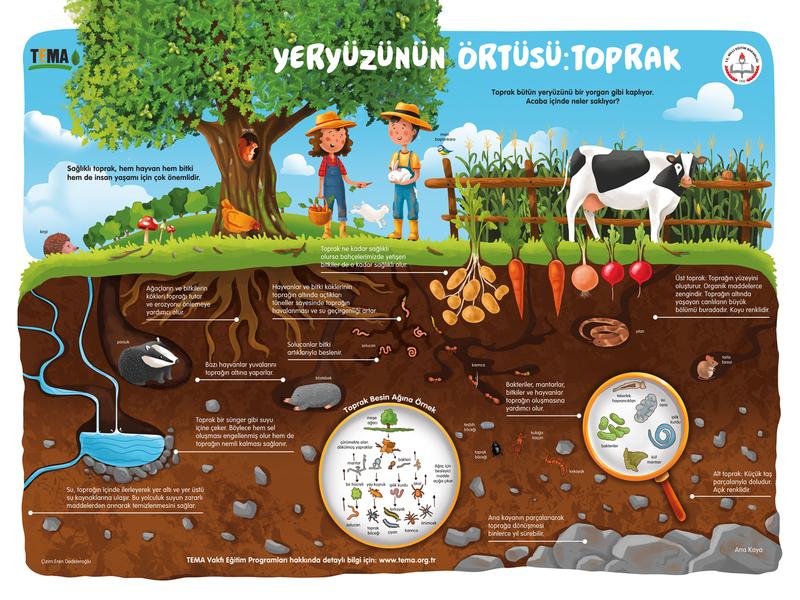 Tema poster 🌳1 art editorial design educational education illustration soil farm water bug organism animals vegetables tree leaf plant nature poster infographic tema