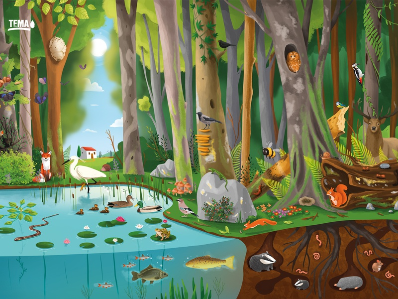 Tema poster🌳2 illustraion editorial jungle farm soil water vegetables poster leaf infographic educational education trees plants fish bugs animals ecosystem nature tema