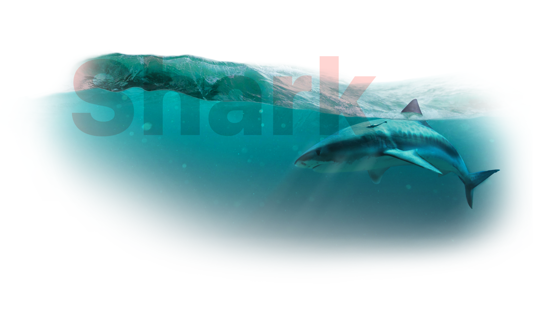 Shark index big