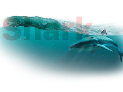 Shark Index surf sea illustration sharkindex infographie alert shark