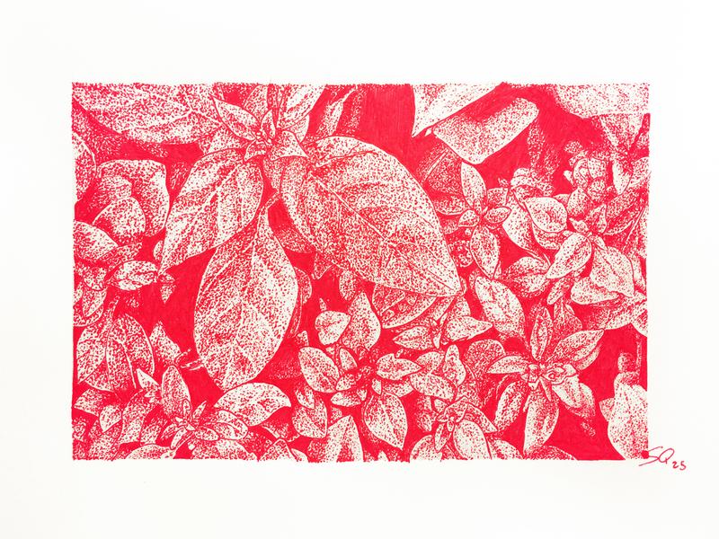 Inktober 25_Herb plant botanical pen ink red ink ink illustration ink drawing inktober2018 inktober illustration drawing