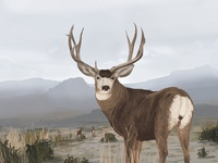 Ensia Voices Illustration | Muley Buck