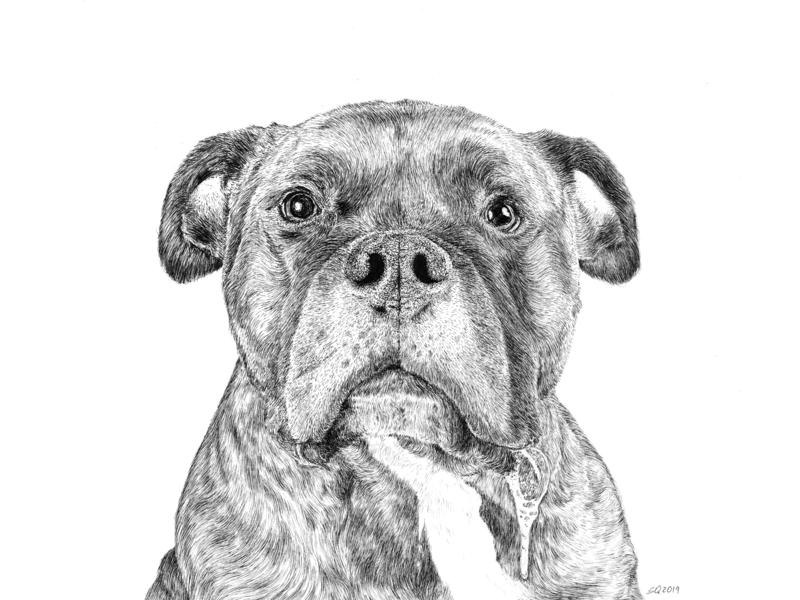 Boo Pet Portrait drool hair micron art portrait art commission portrait puppy pup dog pitbull traditional hand drawn ink illustration ink drawing pen ink drawing illustration