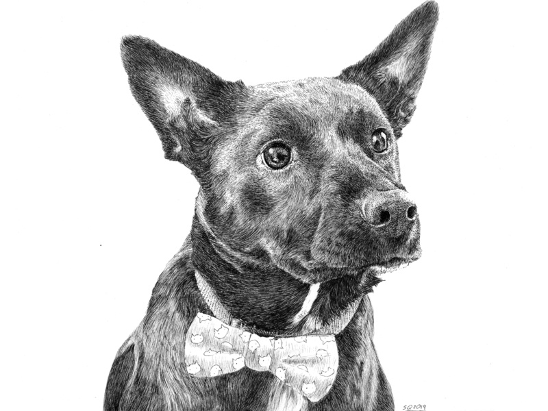 Oliver Commission commissions sean quinn micron pet eyes ears bowtie pup lab dog portrait puppy stipple hand drawn ink illustration ink drawing pen ink drawing illustration