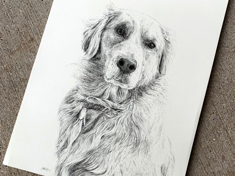 Golden Commission portrait commission puppy dog art hand drawn pen ink illustration ink drawing ink drawing illustration