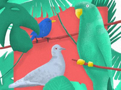 Loving birdwatching! texture animal vegetation spain drawfromadistance wildlife stayhome lockdown jungle leaves plants palmtree parakeet tit turtledove freelance motiondesigner photoshop bird birdwatching