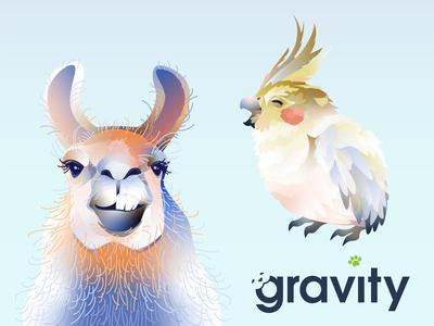 Gravity Payments illustration