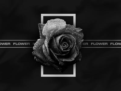 Experimental 03.   Flower 🥀